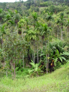 jungle-1371160-639x852