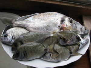 fish-on-a-plate-1306115-640x480