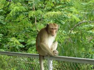 monkey-jungle-1384509-640x480