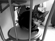 newcat 1