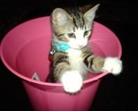 newcat 5