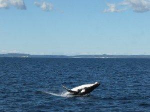 whale-1371145-640x480