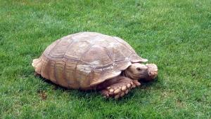tortoise-1574797-1279x728